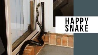 Diamond Python Snake At My Bedroom Door - Australia!