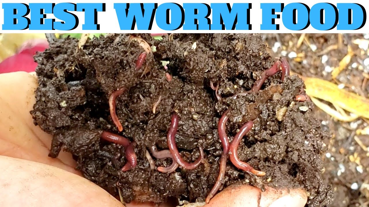 What To Feed Worms Vermicompost Made Easy Youtube