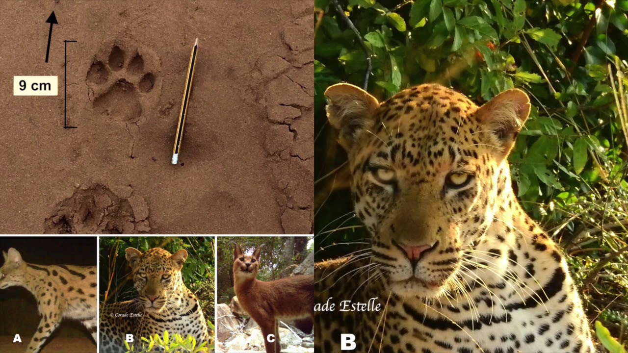 Animal Tracks Identification Quiz