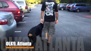 Heeling With Distractions | Rottweiler | Dog Trainer Atlanta