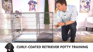 CurlyCoated Retriever Potty Training from WorldFamous Dog Trainer Zak George  Curly Coated Puppy