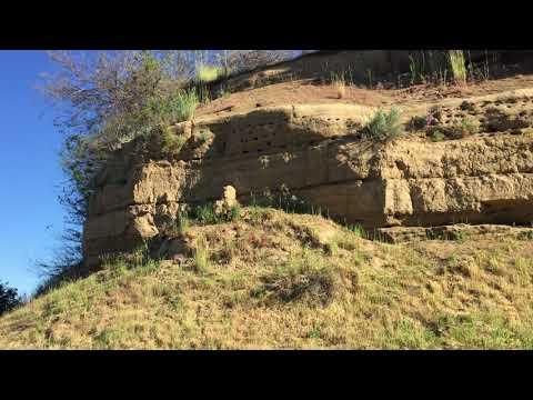 Bank Swallows Fall River Mills