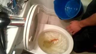 Big Fish Flush