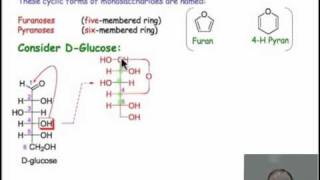 Monosaccharide Chemistry and Cyclic Sugars