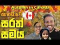 කැනඩාවේ ලස්සනම සෘතුවේ කතාන්දරය | Fall Season In Canada | Canada Sinhala Vlogs | @Seha Vlogs