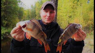 Рыбалка на боковой кивок Сургут ХМАО Рыбалка летом на мормышку Бешенный клев крупного окуня