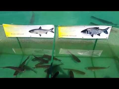 Рыбалка на карпа и снасти для ловли карпа: Рыбалка на карпа