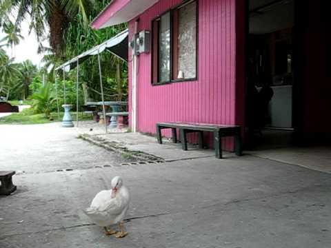 One scene at Laura Village : Marshall Islands, Majuro