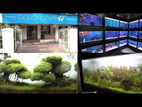 AquaNature Aquarium & Pet Store Mumbai