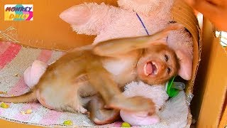 Axel baby angry lady try stop his bad hobbit | Axel baby cry to hit back | Monkey Daily 2743