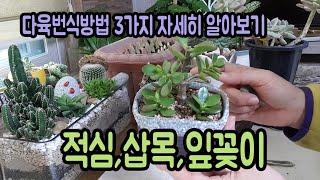 다육이번식법 3가지 :적심,삽목,잎꽂이(How to breed succulent 3th)