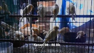 Video GT-HB #2: Harga Burung (Bahan) Yg Lagi Ngetrend Di Pasar Pramuka Jakarta. Indonesia Bird Market download MP3, 3GP, MP4, WEBM, AVI, FLV Oktober 2017
