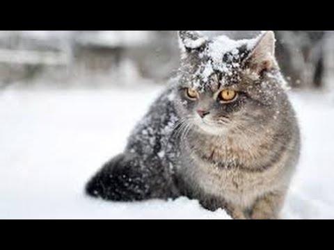 National Geographic Documentary 2017 The Wonderful World of Cats - HD Nature Wildlife Documentary