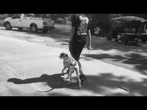 Dalmatian, Edison! Off Leash Heeling and Holding Position! | Top Rated Georgia Dog Training