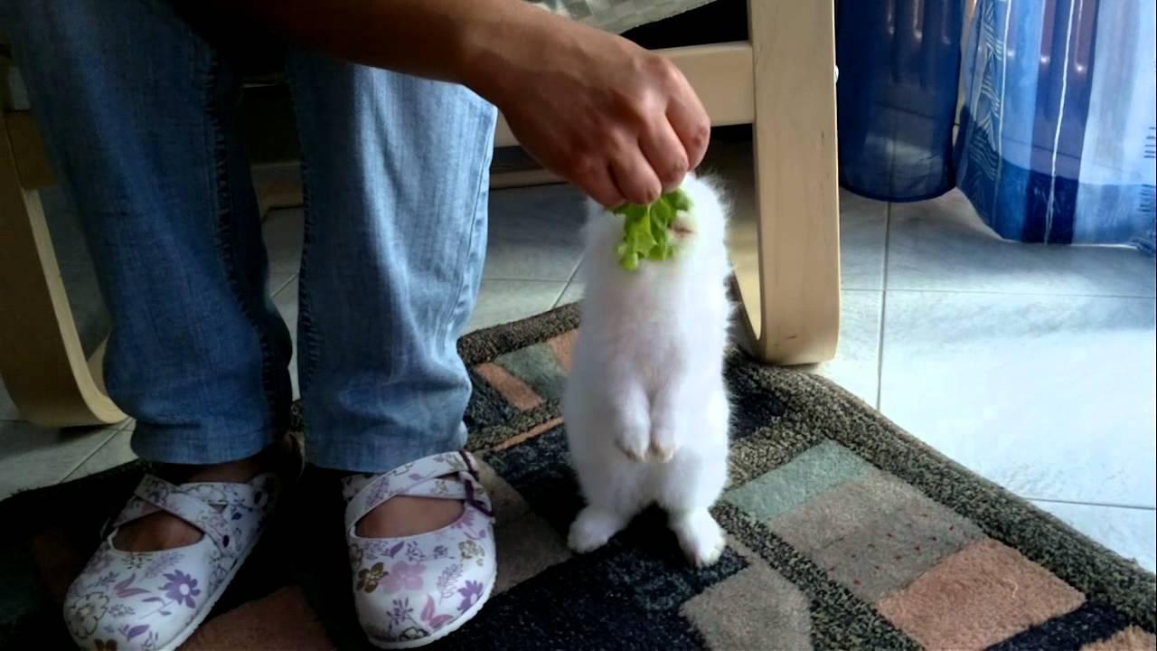 Il mio coniglio nano testa di leone doovi - Lettiera coniglio nano ...