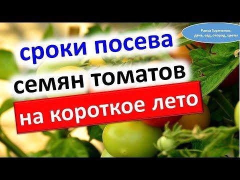 Сроки посева семян томатов на короткое лето
