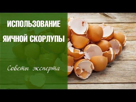 Вопрос: Как использовать яичную скорлупу для защиты растений в огороде?