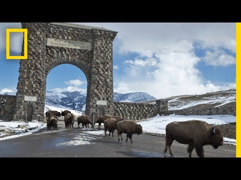 Yellowstone Like You've Never Seen It | National Geographic