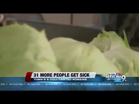 CDC says 31 more people have fallen ill due to E. coli contaminated romaine lettuce