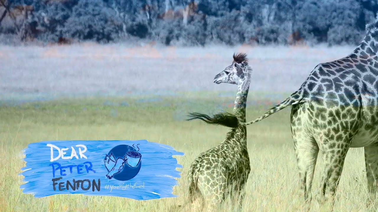 Digital Storytelling #2: A Giraffe in Germany