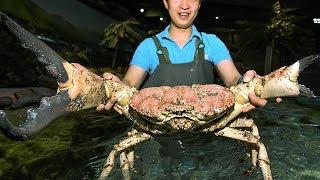 Le 5 Creature più Grandi che siano mai state Pescate!