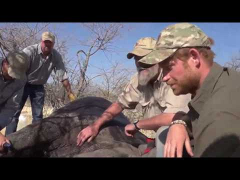 Prince Harry and Rhino Conservation Botswana