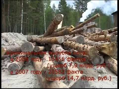 Кто защитит русский лес