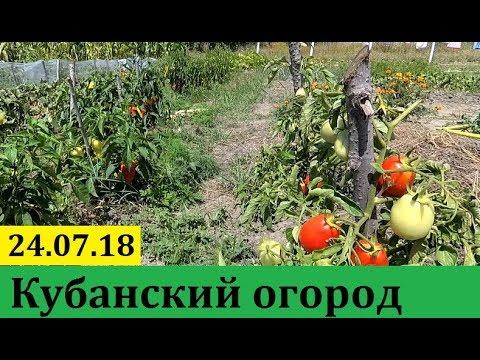 Анапа. Наш огород.