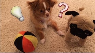パグを触って ボールを触って☆Touch the Pug Touch the Ball おもちゃの...