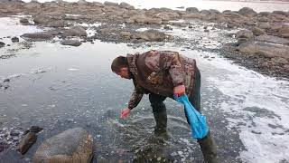 Ловим селёдку руками в Магадане. Catch Herring Hands In Magadan