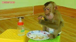 Baby Monkey Kako Enjoying Fried Egg With Rice For Breakfast | Baby Monkey Eat Fried Egg