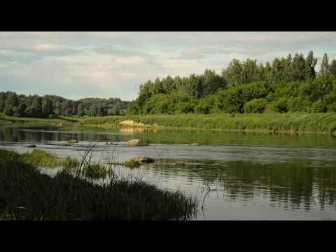 One day with nature: Relaxing Latvian forest birds river rain nature wood sounds #11