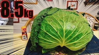 【MUKBANG】 8.5Kg GIANT CABBAGE!! [Cabbage & Meat Mille-Feuille] Sapporo Taikyu [5.5Kg] 5700kcal[CC]