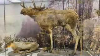 Музей природы Новосибирской области