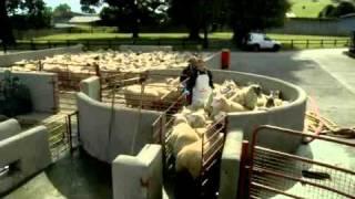 BIMEDA-SHEEP-DIPPING-200411.wmv