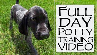 Potty Training 9 Week Old Puppy  Full 24 Hour Breakdown
