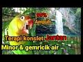Masteran Lovebird Konslet Sampit Gemricik Air Lebih Cepat Masuk Paling Di Cari  Mp3 - Mp4 Download