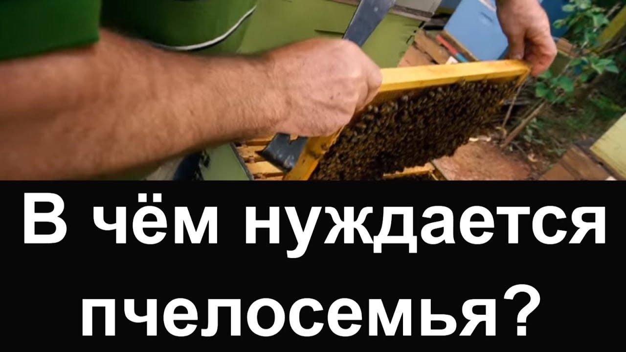 Пасека #49 В чём нуждается пчелосемья ? Подготовка к зиме. Пчеловодство. Пасека.