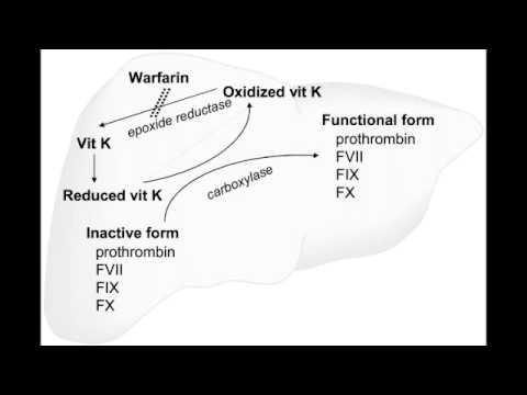 Procoagulation - Vitamin K (coagulation cascade components)