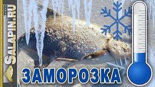 Заготовки на зиму, как правильно заморозить рыбу, грибы, ягоды [salapinru]