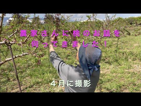 農家さんの桃の話