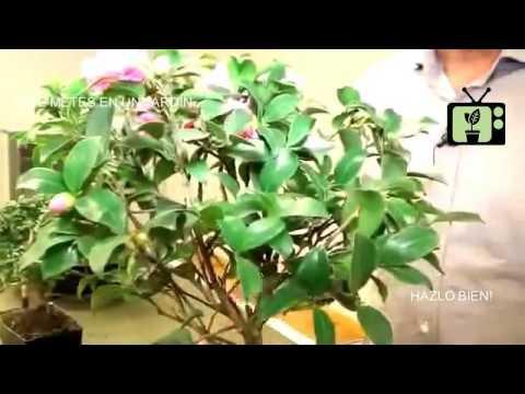 Jardineria en casa parte 21 jardiner a tv youtube - Jardineria en casa ...