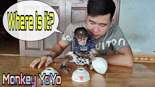 Monkey YoYo jr plays guess game is very funny |Monkey Baby YoYo