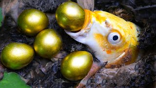 Stop Motion ASMR - Golden Egg fish come out, Betta fish Freshwater eel Experiment Cooking