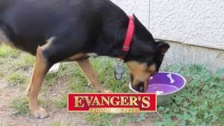 Evanger's Food For Pets - Overweight Pets