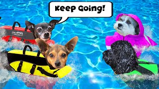 Giving Best Friends Dogs Swimming Lessons for the First Time! | Pawzam Dogs