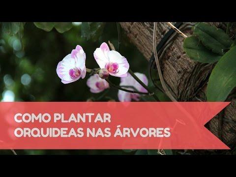 Como plantar orquídeas em árvores!