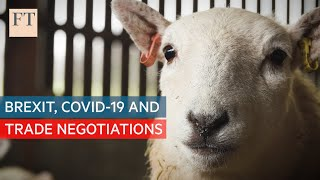 Brexit, Covid-19 and trade negotiations: what can sheep tell us? | Trade Secrets