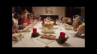 family dinner on christmas 13 dogs and 1 cat   13 kpek ve 1 kedi   13 hunde und 1 katze