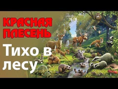 Красная Плесень - Тихо в лесу
